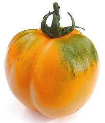 Photos de tomates 181007111615690481