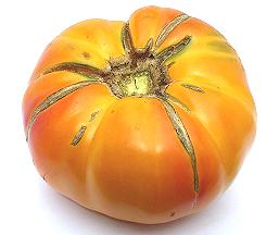 Photos de tomates 181009010518106811