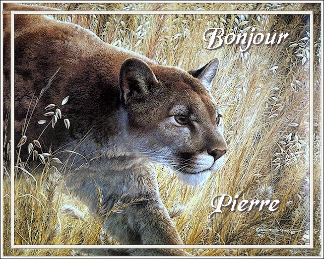 Bonjours/Bonsoirs Automne 2018 181011091500309235