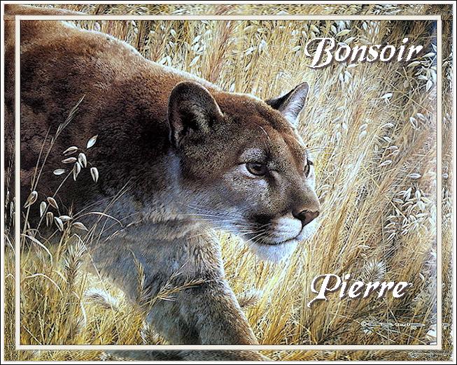 Bonjours/Bonsoirs Automne 2018 181011091548590915