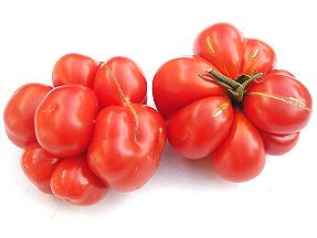 Photos de tomates 181011110826288796