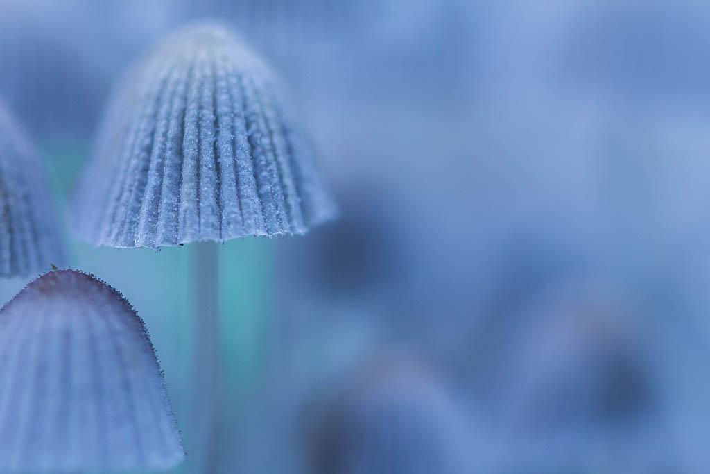 champignons + Maj 31/10 181014095436892599