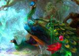 ★ Peacocks Battles ★