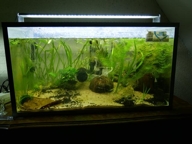 Présentation aquarium 80L et 60L gege.27 18101601034062752