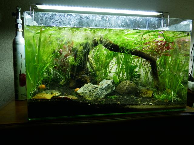 Présentation aquarium 80L et 60L gege.27 181016010352683888