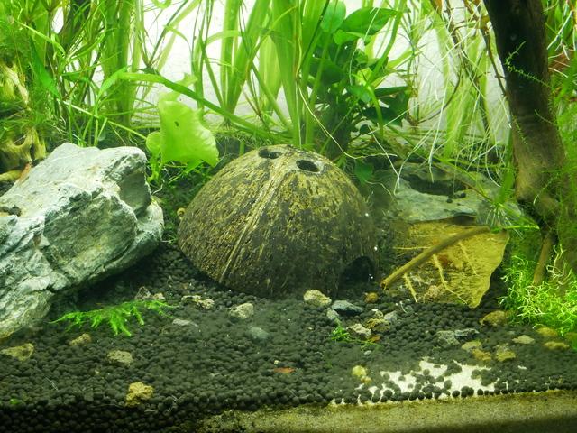 Présentation aquarium 80L et 60L gege.27 181016010600345998