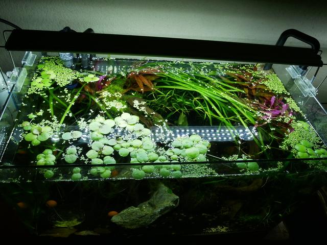 Présentation aquarium 80L et 60L gege.27 181016010611728162