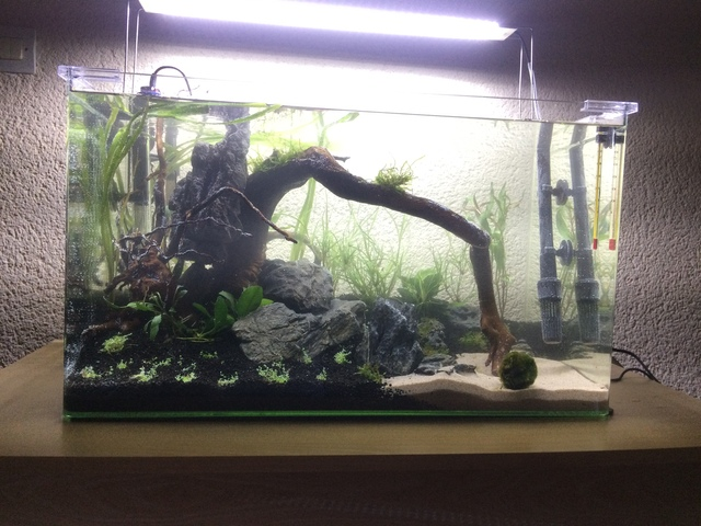 Présentation aquarium 80L et 60L gege.27 18101604342255233