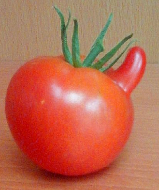 Photos de tomates - Page 2 181018101741919318
