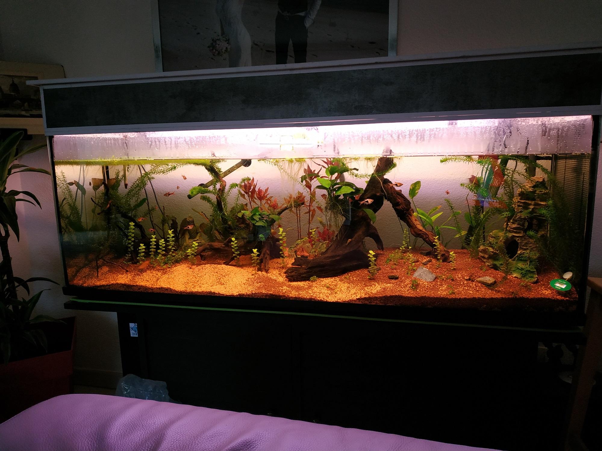 Suivi Aquarium 300L 181022101456838707