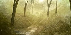 ♦ La Forêt Perdue ♦