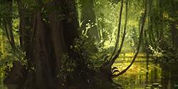 ♦ La Jungle ♦