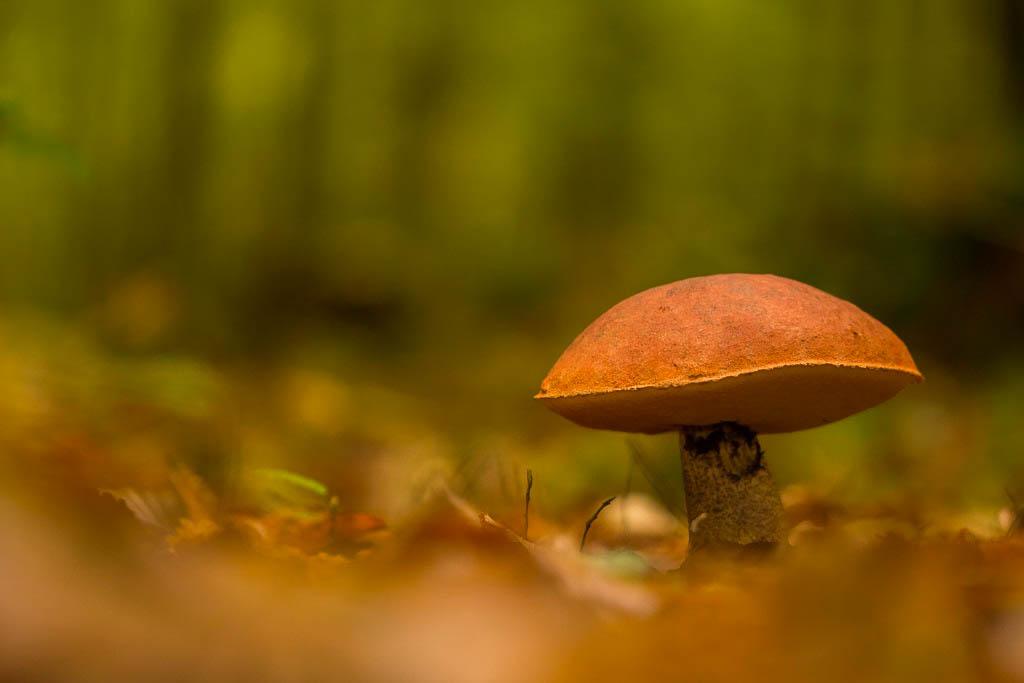 champignons + Maj 31/10 181031081438845235