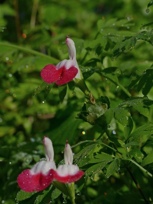 Plantes étonnantes (ou belles ou intéressantes ou marrantes ou ce que vous voulez) - Page 2 181107060044685948