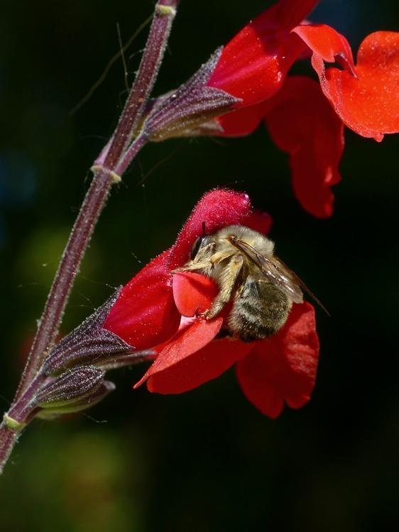 Plantes étonnantes (ou belles ou intéressantes ou marrantes ou ce que vous voulez) - Page 2 181107084759698364