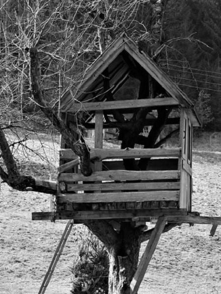 vieille-cabane-arbre