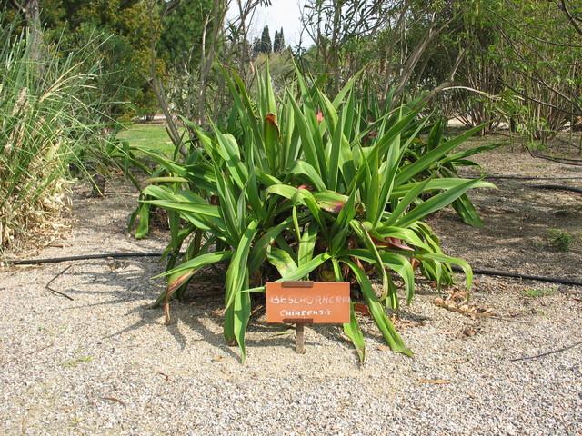 Plantes étonnantes (ou belles ou intéressantes ou marrantes ou ce que vous voulez) - Page 2 18111609223382213