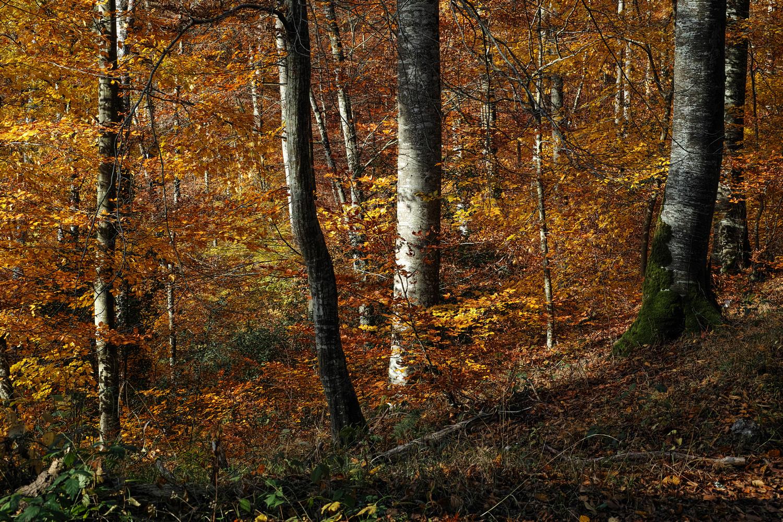 """thème du jeu de Novembre """"Couleurs d'automne"""" 181116112950887700"""