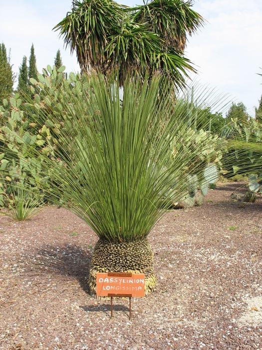 Plantes étonnantes (ou belles ou intéressantes ou marrantes ou ce que vous voulez) - Page 2 181117091610457755