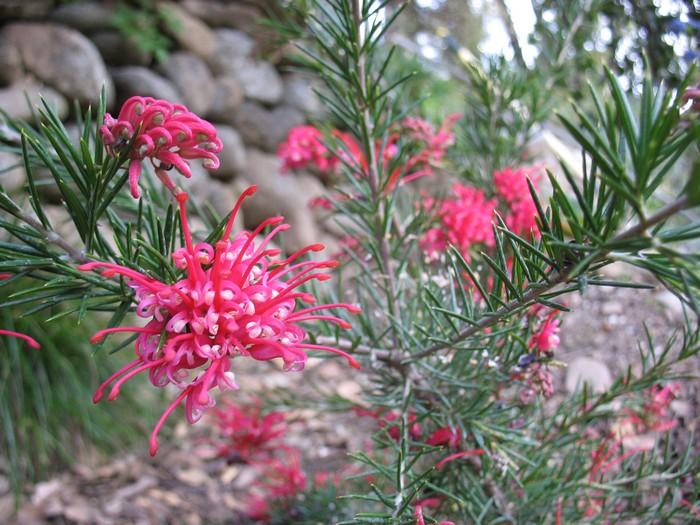 Plantes étonnantes (ou belles ou intéressantes ou marrantes ou ce que vous voulez) - Page 2 181118010936370809