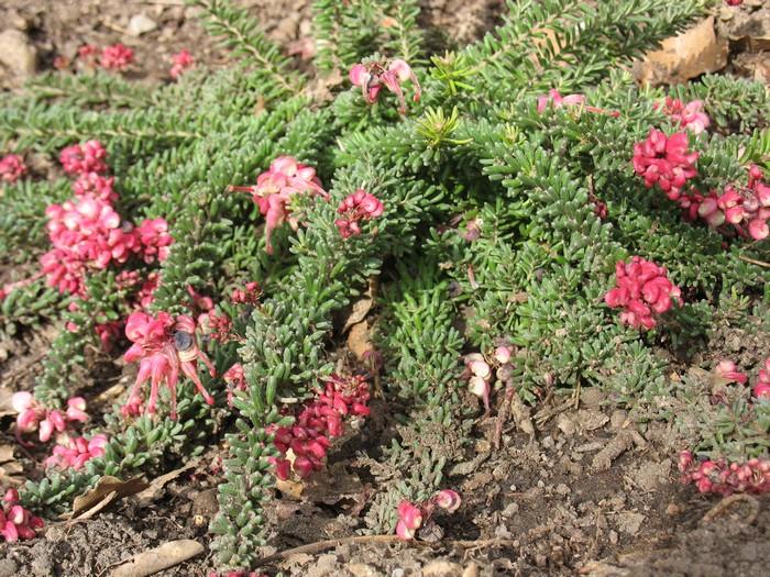 Plantes étonnantes (ou belles ou intéressantes ou marrantes ou ce que vous voulez) - Page 2 181118011126755627
