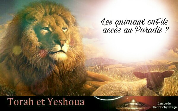 Les animaux ont-ils accès au Paradis ?  181122045218156128