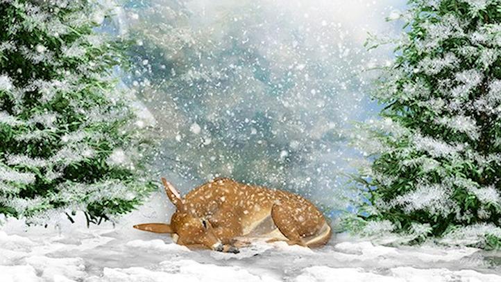 Paysages d'hiver ... 18112311010779867