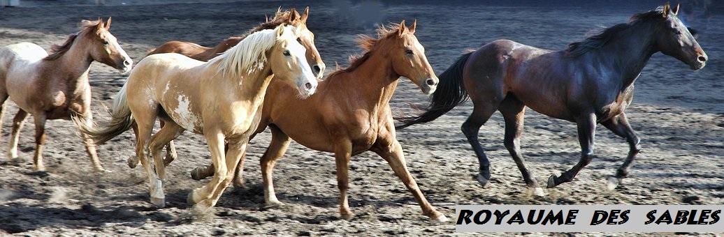 horse-2629042__340 - Copie (2)