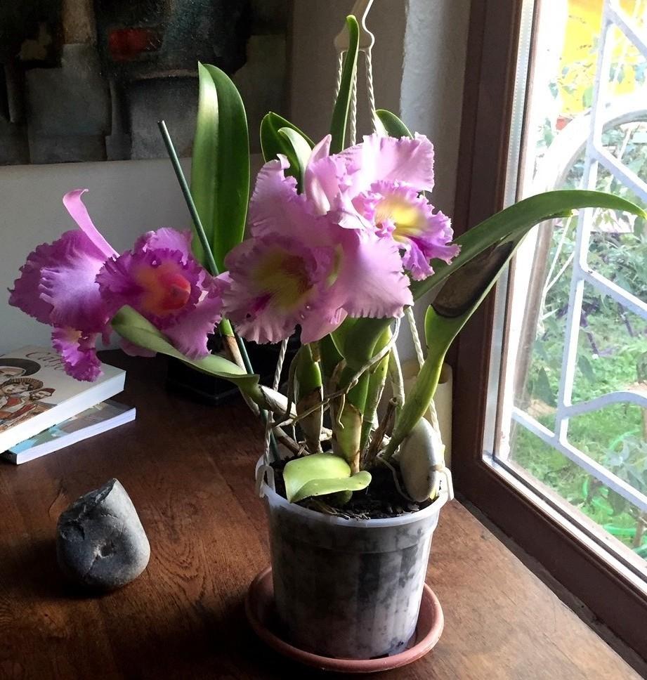 hybride et 4 fleurs 181208033404824060