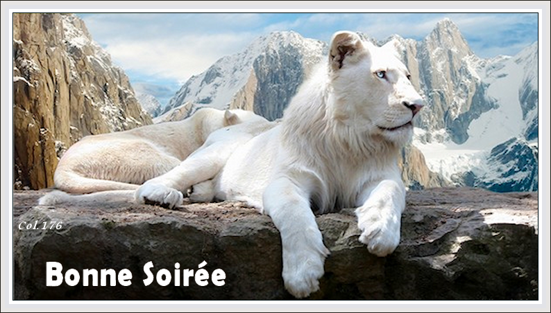 Bonjours/Bonsoirs Fêtes et Hiver 181215042330403066