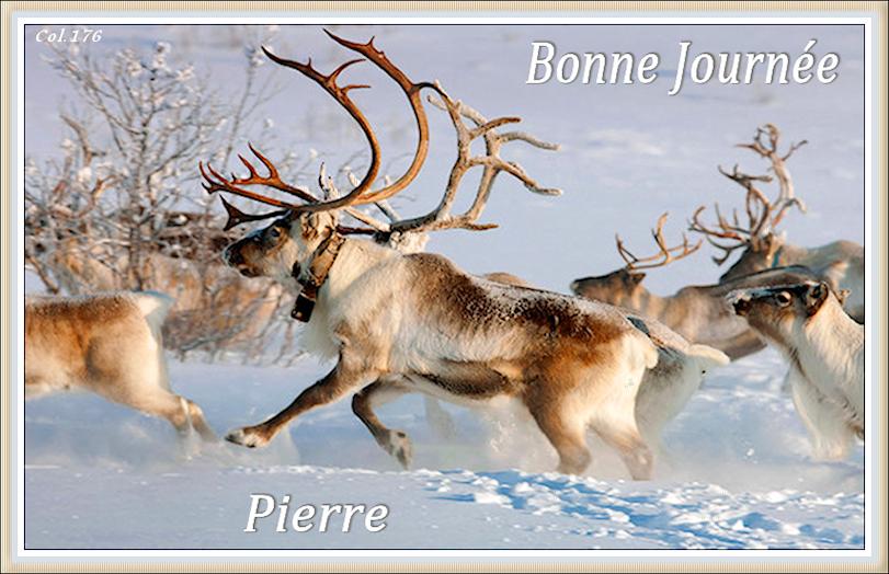 Bonjours/Bonsoirs Fêtes et Hiver 181215050851283081