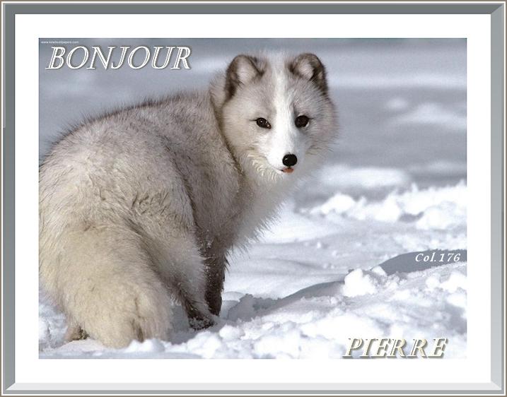 Bonjours/Bonsoirs Fêtes et Hiver 181215050959804653