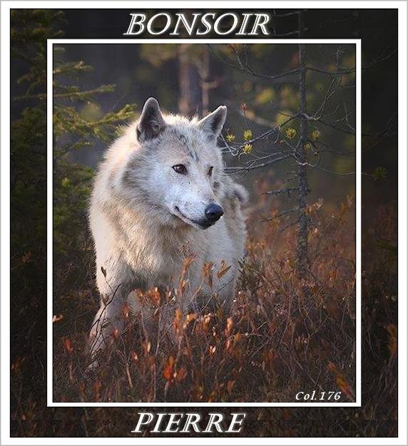 Bonjours/Bonsoirs Fêtes et Hiver 181215054847512510