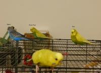 Piwi, Pilou, Petit Pied et Ezio - Page 2 Mini_181222080136441709
