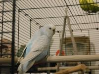 Piwi, Pilou, Petit Pied et Ezio - Page 2 Mini_181222080245918521