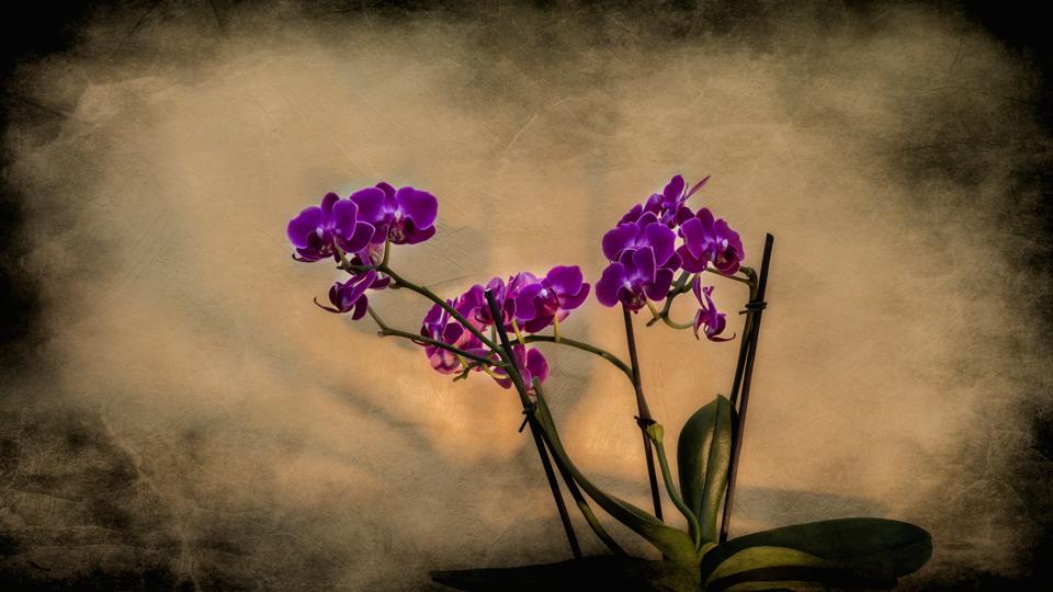 Orchidées 181228063931667204