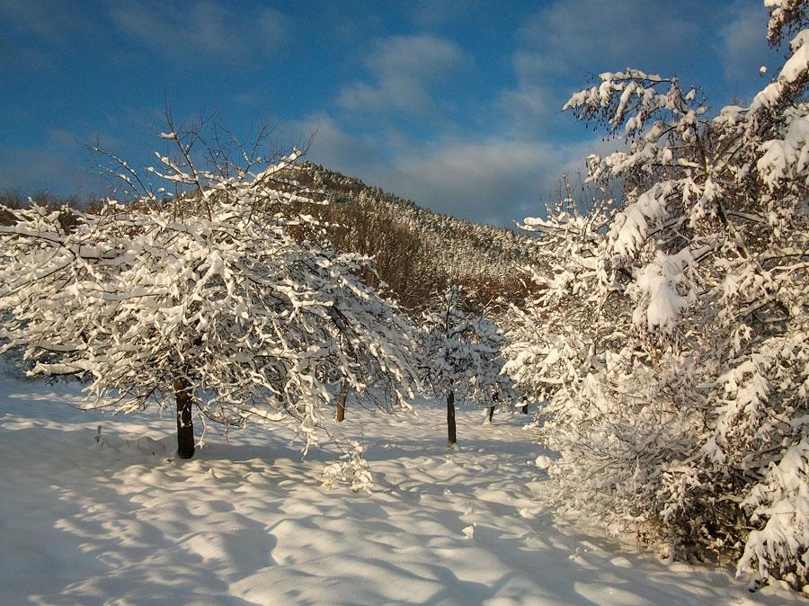 26décembre2010-011